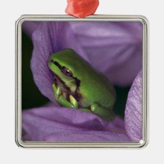 White's tree-frog metal ornament