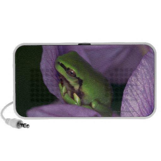 White's tree-frog travel speaker