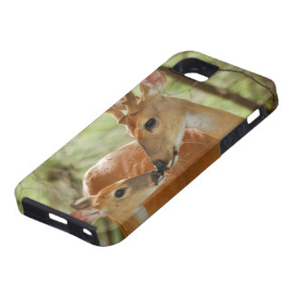 Whitetail Buck And Fawn Bonding iPhone 5 Case