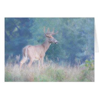Whitetail  Buck (Deer) in  Summer Meadow Card