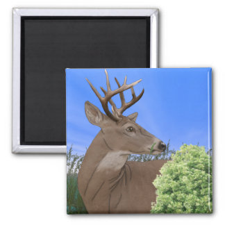 Whitetail Buck Deer Square Magnet