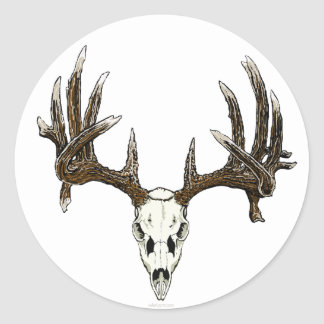 Whitetail buck skull classic round sticker
