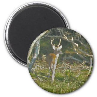 Whitetail Deer Buck OBX Magnet