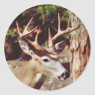 Whitetail Deer (Buck) Sticker