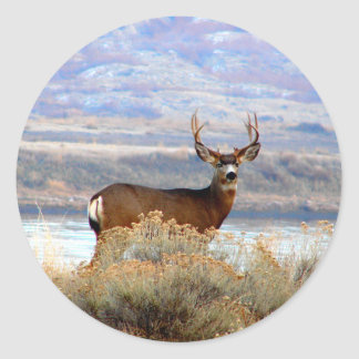 Whitetail Deer by Columbia River Round Sticker