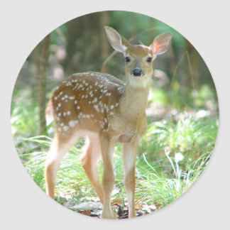 Whitetail Deer Fawn Sticker