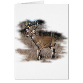 Whitetail deer in the field greeting card