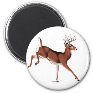 Whitetail Deer Fridge Magnet
