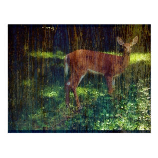 Whitetail Deer Postcard