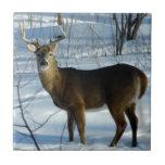 Whitetail Deer (Winter) Decorative Ceramic Tile