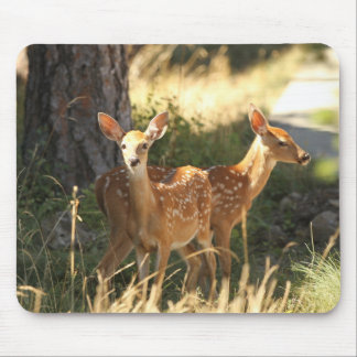 Whitetail fawn twins mouse pad