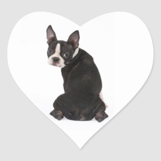 Who Me Boston Terrier Dog Sticker
