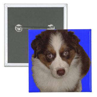 Who me? Red Tri Aussie Puppy 15 Cm Square Badge