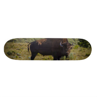 Who You Looking At 19.7 Cm Skateboard Deck