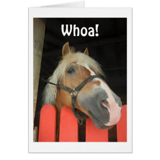 """'WHOA SAY THE HORSE' HEADING FOR THE BIG """"40"""" CARD"""