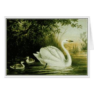 Whooper Swan Customize Card