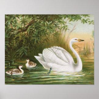 """""""Whooper Swan"""" Vintage Bird Illustration Poster"""