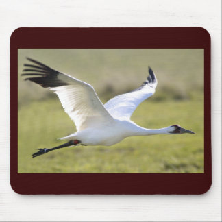Whooping Crane (Grus americana) Mouse Pad