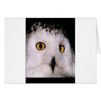 WHOOT OWL CARD