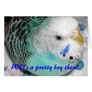 Who's a pretty boy then? card
