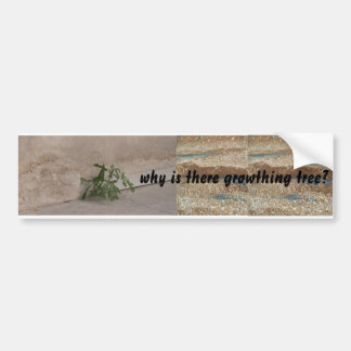 why is there growthing tree? bumper sticker