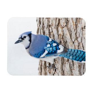 Wichita County, Texas. Blue Jay 4 Rectangular Photo Magnet
