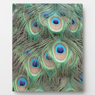 Wide Spreed Of Peacock Eyes Photo Plaque