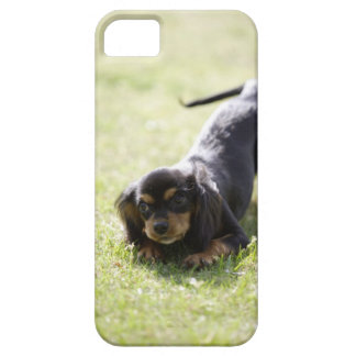 Wiener dog (black) case for the iPhone 5