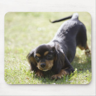 Wiener dog (black) mouse pad