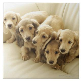 Wiener puppies tile