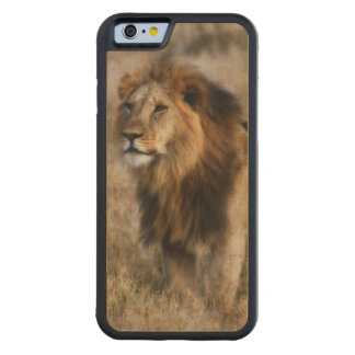 Wild African Lion in Kenya Wood iPhone 6 case