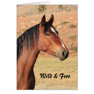 Wild and Free Mustang Greeting Card