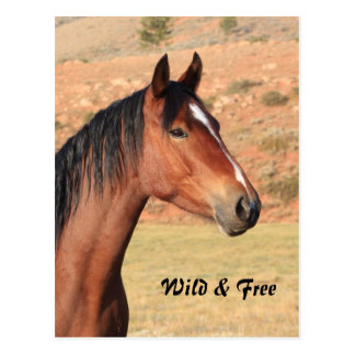 Wild and Free Mustang Postcard