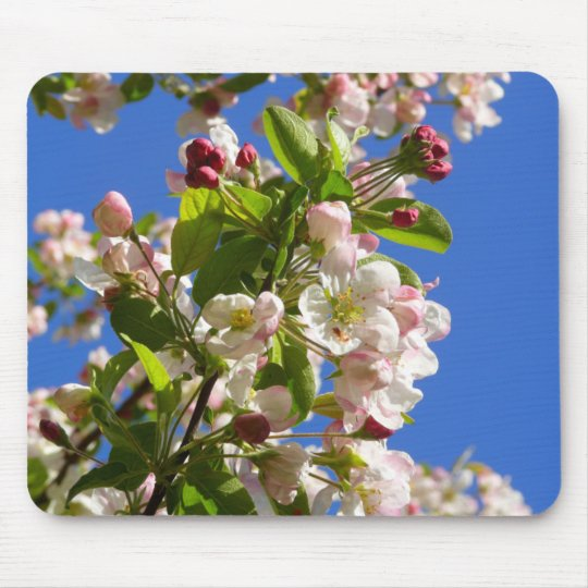 Wild Apple Tree blossoms Mouse Pad