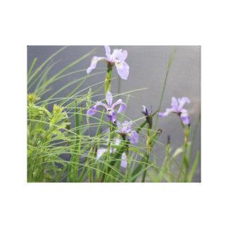 Wild Arctic Iris Canvas Print
