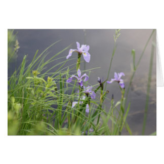 Wild Arctic Iris Card