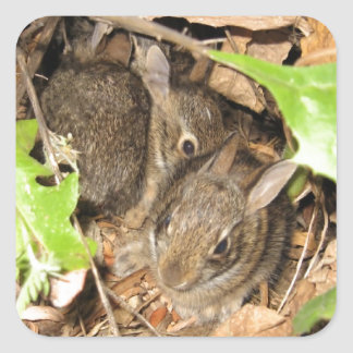 Wild Baby Bunnies Square Sticker