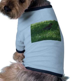 wild bird dog clothes