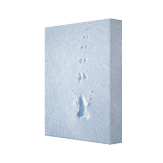 Wild Bird Footprints in Snow Gallery Wrapped Canvas