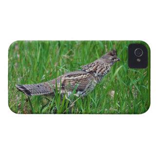Wild Bird for Bird-lovers iPhone 4 Case