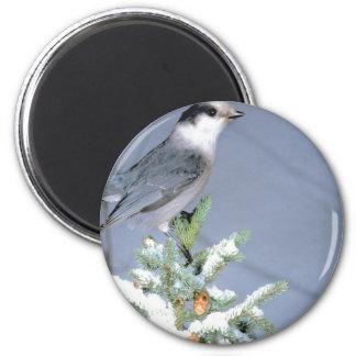 Wild Bird Winter Magnet