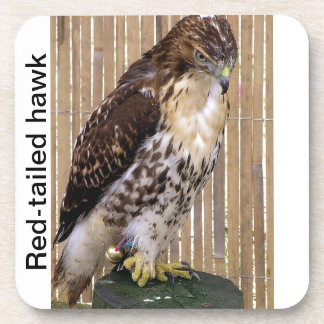 Wild Birds: Red-Tailed Hawk Beverage Coaster