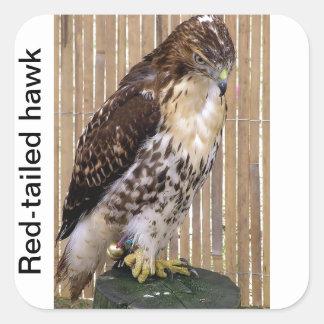 Wild Birds: Red-Tailed Hawk Square Sticker