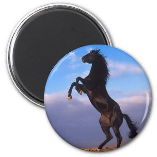 Wild Black Stallion Rearing Horse 6 Cm Round Magnet