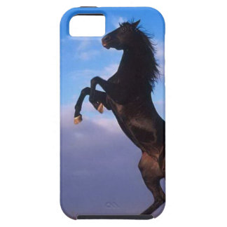 Wild Black Stallion Rearing Horse iPhone 5 Covers