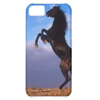 Wild Black Stallion Rearing Horse iPhone 5 Case