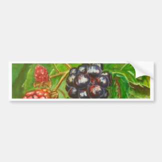 Wild Blackberries ripening in Summer Bumper Sticker