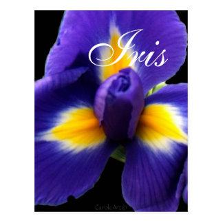Wild Blue Iris Postcard