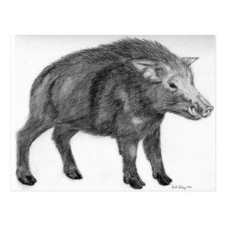 Wild Boar, Defensive Stance Postcard