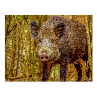 Wild Boar Postcard